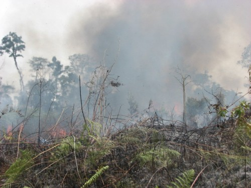Fire rages on eastern side of Tanjung Puting National Park