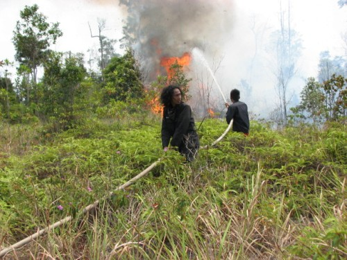 OFI rangers fighting fire on eastern side of Tanjung Puting Nationa Park