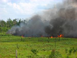 Fire roars across landscape in eastern part of Tanjung Puting National Park